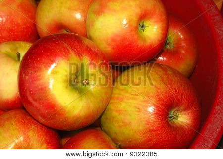 Barrels of Apples