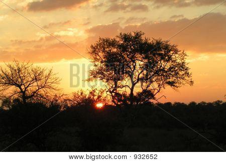 Bushveld Sunrise 1