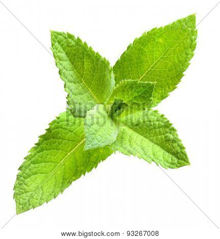 Spearmint (Mentha spicata) is an ingredient in several mixed drinks, such as the mojito and mint julep. In herbalism, spearmint is steeped as tea for the treatment of stomach ache.