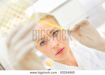Scientist observing petri dish.