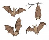 cartoon bats in pencil drawing style. vector format. poster