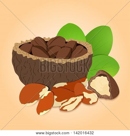 Vector illustration Brazil nut. A handful of shelled Brazil nuts in shell and shelled, leaves.