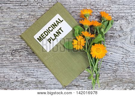 Medicinal plant calendula and herbalist handbook on old wooden table. Actively used in herbal medicine cosmetics healthy nutrition