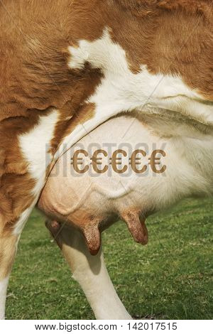 Extreme closeup of brown cow's udder with the Euro symbol
