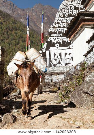 Buddhist prayer mani walls and mule khumbu valley way from Lukla to Namche Bazar Nepal