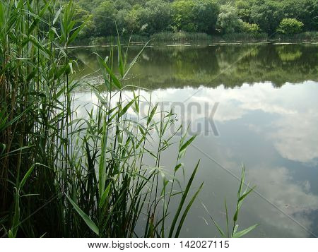 soft white clouds reflected in the clear water of the river. bright green trees and cane frames the water surface.