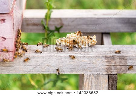 Honey bees swarming and flying around their beehive and honeycomb