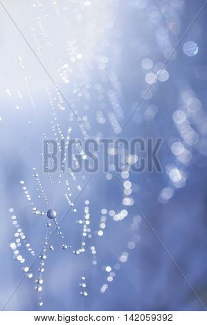 Dewy morning cobweb (spider web) on a tree branch with droplets of water