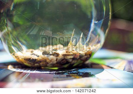 Goldfish In A Beautiful Round Aquarium