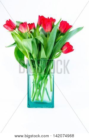 Fresh bouquet of red tulips in bluish glass vase with water.