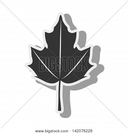 plant canadian autumn green leaf ecology leaves silhouette vector graphic isolated and flat illustration