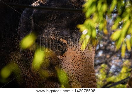 Spotted Elephant Closed Eye Hidden Behind Green Leaves Daytime