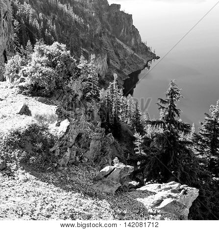 Crater Lake's rim along its cliff side is very rough terrain but somehow trees and bushes find a way to grow on it.