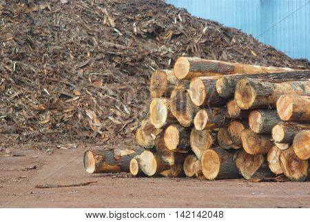 sawmill yard  logs with wood chips in background