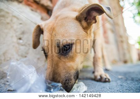 Sad lonesome stray dog eats junk food