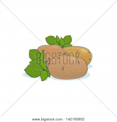 Potato Isolated on White Background, Three Different Kinds Potato ,Vegetables Praties ,Edible Fruit ,Vector Illustration