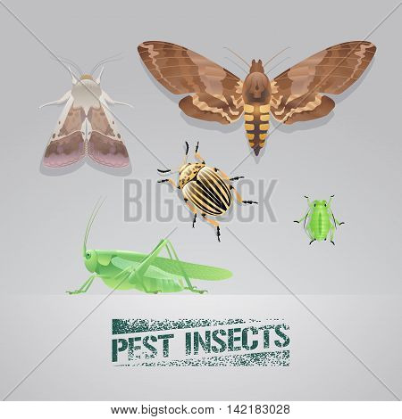 Set of pest insects vector realistic illustration. Agriculture and garden pest bugs fly colorado beetle locust moths. Pest insects stamp sign