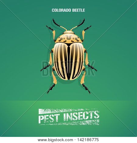 Realistic vector illustration of insect Leptinotarsa decemlineata colorado beetle. Pest insect of potato farmland. Design element for insecticide poster brochure article