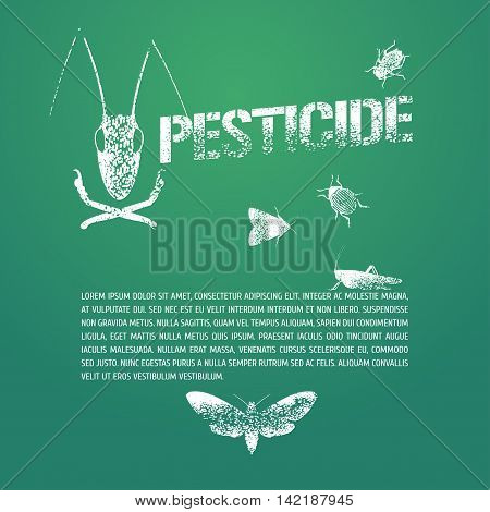 Set of pest insects and template bodycopy vector illustration. Design element icons of agriculture and garden pest bugs fly colorado beetle locust moths. Pesticide stamp sign