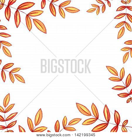 background with autumn watercolor rowan leaves , nature template, foral frame, hand drawn design elements
