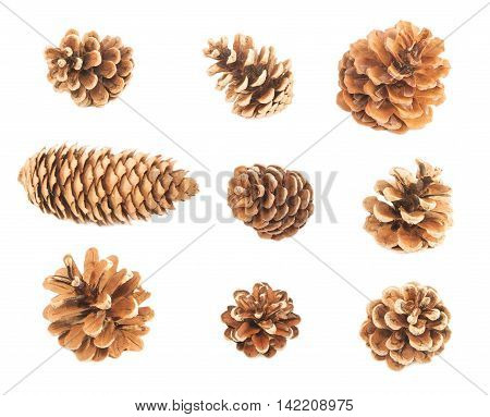 Various pine cones isolated on white background