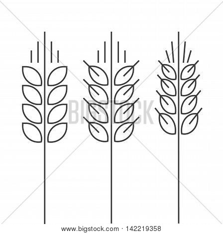 Wheat spike vector icons set isolated on white background, grain ear logo element for organic food design, outline thin line style black spica