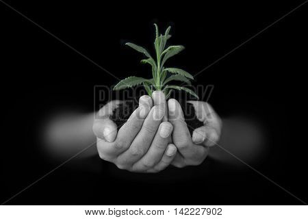 Hands with soil and a green sprout
