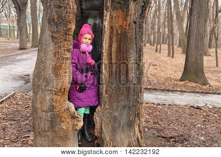 old oak with hollow, which can fit man, girl standing in hollow and looking at camera