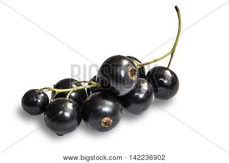 Blackenning currant ripe berries on white background