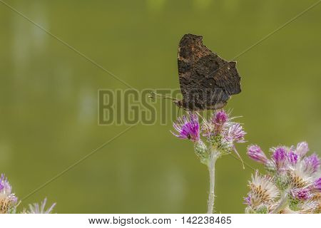 A small tortoiseshell is sitting on a flower