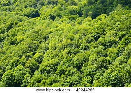 Aerial view of the summer green forest.