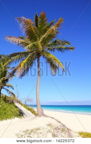 Caribbean Coconut Palm Trees In Tuquoise Sea