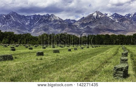 Hay Field with fresh cut hay and bales