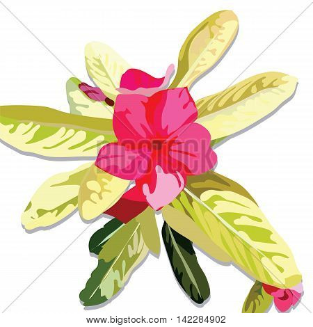Pink Fuchsia Summer flower isolated on white. Watercolor Vector