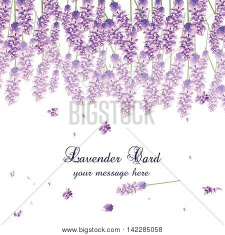 Lavender Card with flowers in watercolor paint style Vector. Gentle blossom floral bouquet. Vintage Label with lavender beautiful fragrance
