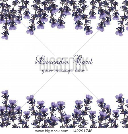 Lavender Card decorated Border. Gentle blossom floral Lavanda bouquet. Vintage Label with lavender beautiful fragrance