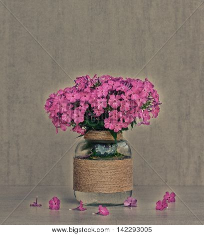 flower bouquet of Phlox in vase homemade closeup on gray background closeup. tinted photo