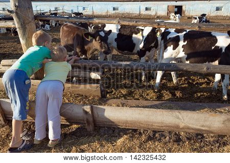 Gomel, Belarus - July 10, 2016: Boys On A Farm Near The Corral With Cows In Gomel, Belarus.