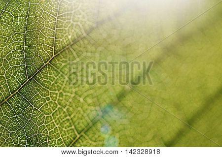 leaf texture close-up, close-up shot of fiber, nature, background