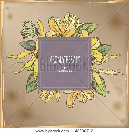 Elegant color center frame template with ylang-ylang sketch on vintage background. Aromatherapy series. Great for traditional medicine, perfume design, cooking or gardening.