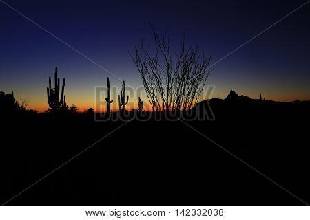 Giant saguaro and organ pipe cacti in Arizona sunset