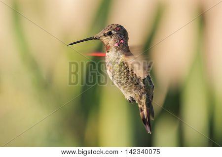 Cute Humming Bird