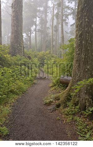 Parks fog and nature along the Oregon coast.
