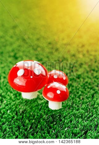 Three Mushroom Amanita In The Meadow