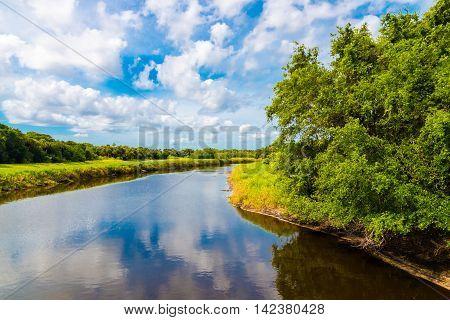 River with alligators at Florida Myakka River State Park. Summer natural landscape wetland.