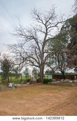 HENLEY BROOK,WA,AUSTRALIA-JULY 15,2016: Old All Saints Church cemetery with headstones and large leafless tree under a cloudy sky at dusk in Henley Brook, Western Australia.