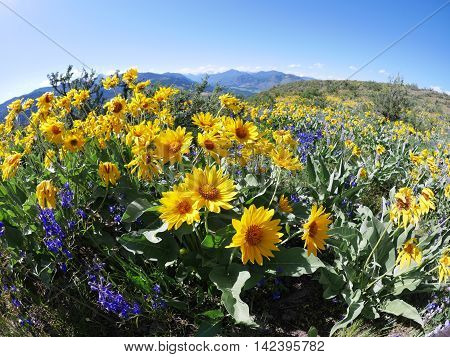 Patterson Mountain in North Cascades National Park near Winthrop Washington USA.