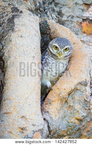 Owl standing on tree hole, natural wildlife landscape background