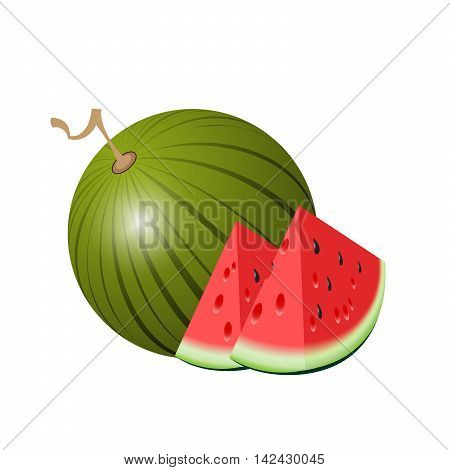 Watermelon. Isolated watermelon on white background. Piece of watermelon. Vector illustration of watermelon.