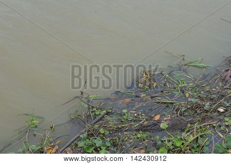 Garbage floating in river, Water pollution. Ecological problem
